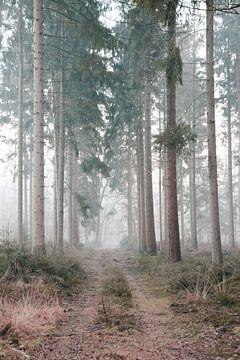 Waldweg im Speulderbos von E Blaas