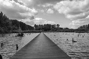 Het Verdronken Bos van Ingrid de Vos - Boom