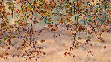 gordijn van bladeren van P Leydekkers - van Impelen