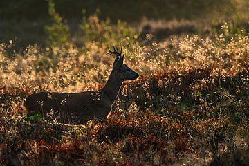 Roe deer, van Stijn Smits