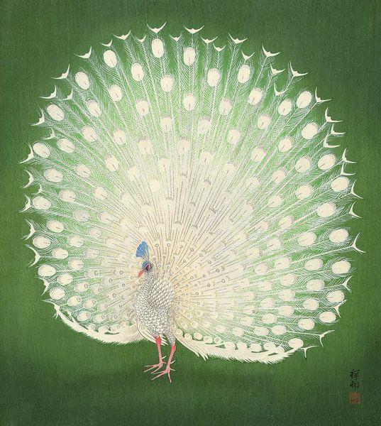 Peacock, Ohara Koson van 1000 Schilderijen