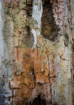 Structures des arbres sur Maja Mars