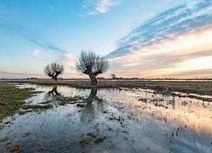 Knotwilgen in weiland tijdens de zonsondergang i van Michel Knikker