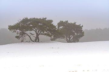 Winter landschap van iljan wakker