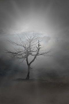 mystieke boom von eric brouwer