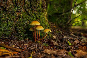 Paddestoelen op de bosgrond