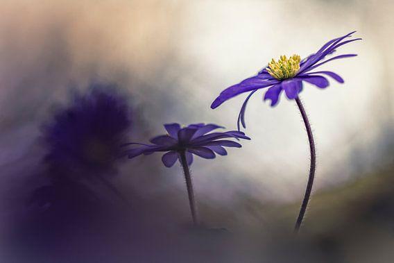 Tenderness and kindness van Bob Daalder