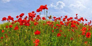 Field Of Red Poppies van