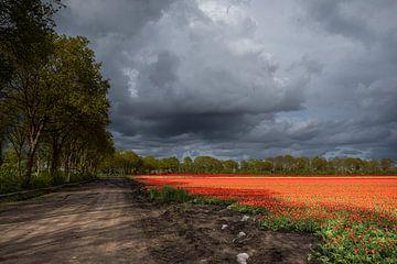 Bedrohliche Wolken über dem Tulpenfeld von Coby Koops  natuurkieker.nl
