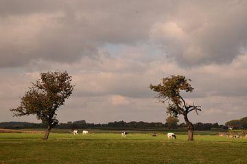 Een typisch Haspengouws landschap von Maarten Honinx