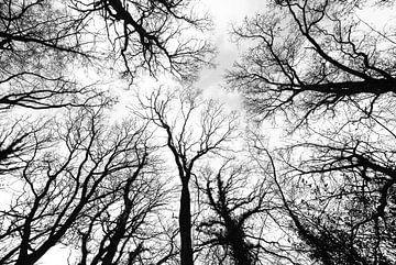 silhouetten van boomtakken tegen hemel in herfst in zwartwit van Jan Fritz