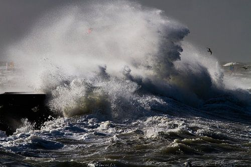 Zilvermeeuw vliegt in de storm langs de pier van IJmuiden van