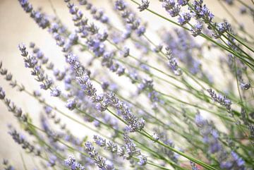 Lavendel von Tess Smethurst-Oostvogel