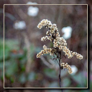 Blume von Frank Janssen
