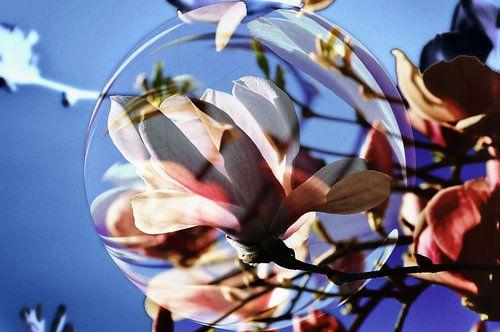 Magnolienblüte - abstrakt