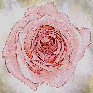 roze roos, vintage look van Rietje Bulthuis