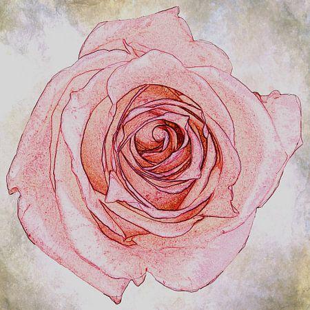 roze roos, vintage look
