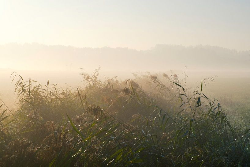 Nebeliger Wald von Arjen Roos