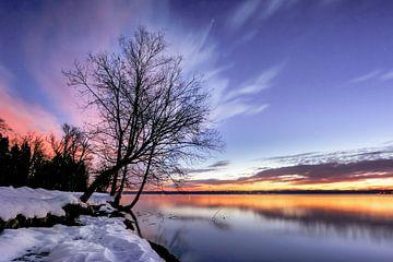 LP 71337520 Kale boom op een winterochtend bij zonsopgang op het meer van Starnberg, Duitsland van BeeldigBeeld Food & Lifestyle