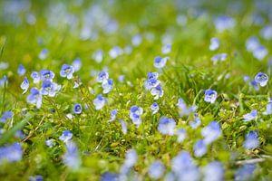 De felle kleuren van de Ereprijs in het grasveld