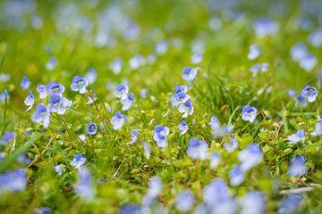 De felle kleuren van de Ereprijs in het grasveld van