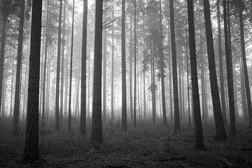 Nebliger Kiefernwald in Schwarz-Weiß von Cor de Hamer