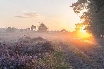 Sonnenaufgang an der blühenden Heide. von Evelien IJpelaar