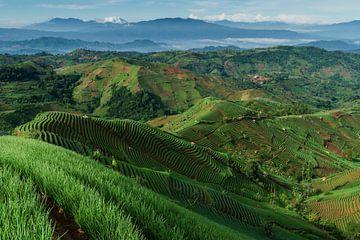Uitzicht op de uienvelden van Argapura, Majalengka in West Java van Anges van der Logt