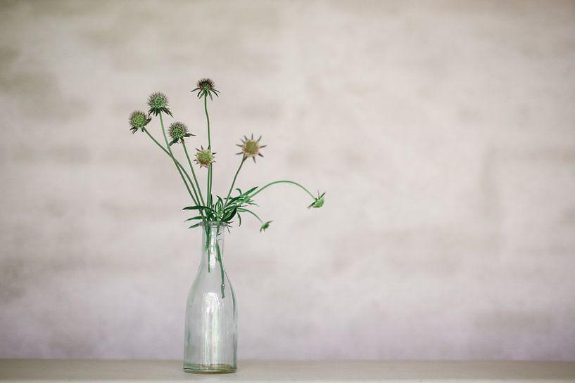 Fleur sur Carla Van Iersel
