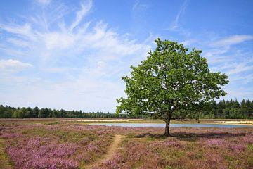 Strabrechstse Heide von Inge Schepers