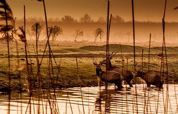The crossing. van Robin Pics (verliefd op Utrecht)