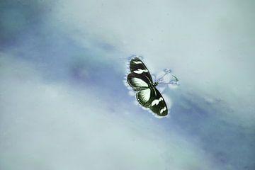 verdronken vlinder sur hanny bosveld