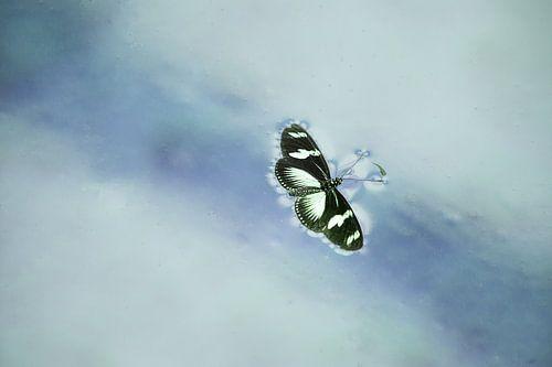 verdronken vlinder van