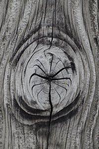 Knoest in hout van
