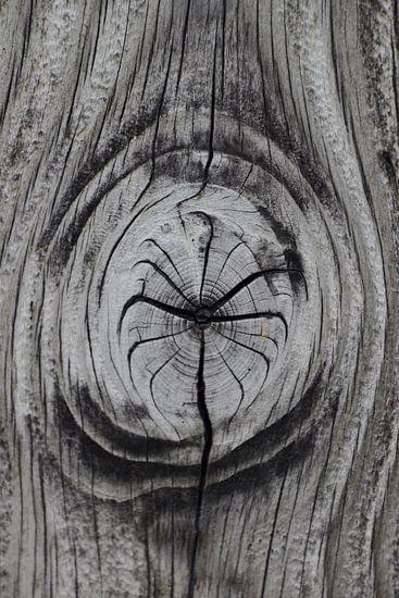 Knoest in hout van Susan Dekker