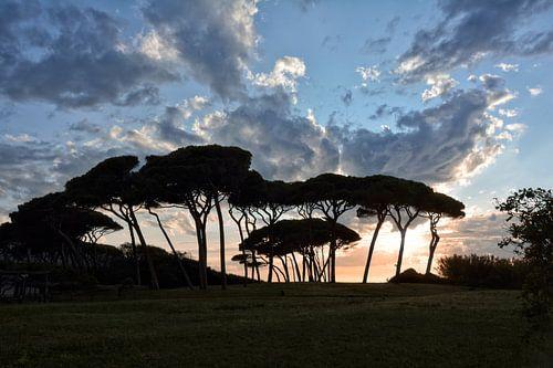 The Baratti Pine Trees van Joachim G. Pinkawa