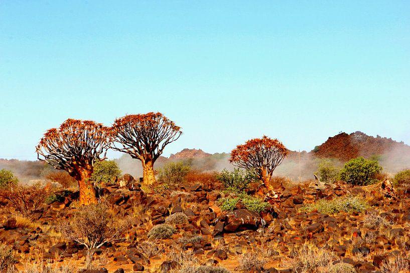 Kokerbomen en mist, Namibië van Inge Hogenbijl