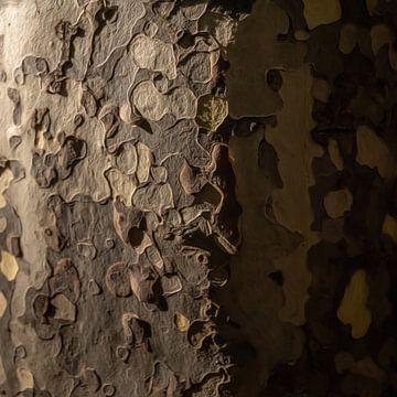 Abstract boomschors VI van Maurice Dawson