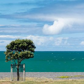 La côte de Napier sur Ton de Koning