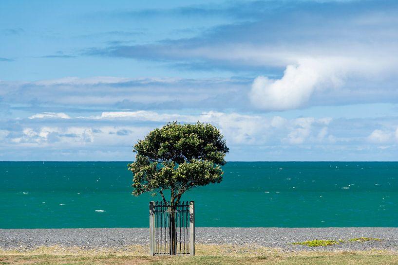 Napier kust van Ton de Koning