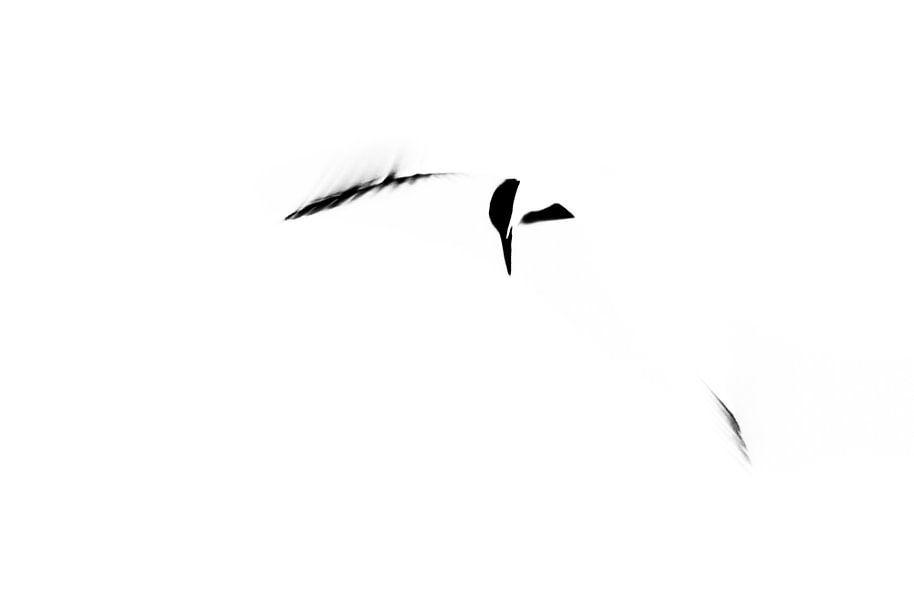 Abstract Sandwich Tern