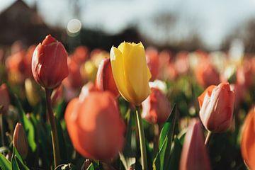 Farbige Tulpen von Sanne Dost