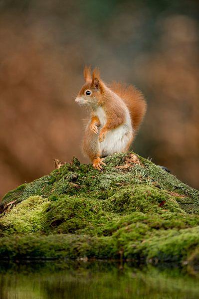 verbaasde eekhoorn van Mike Seuters