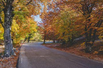 Indrukwekkende herfstkleuren in eikenbos van Fotografiecor .nl