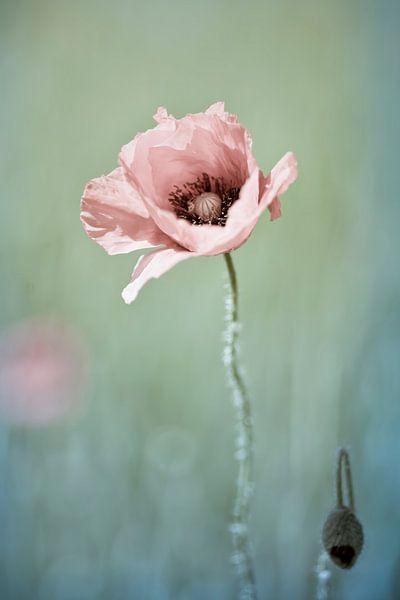 Lonely Poppy van Nanouk el Gamal - Wijchers (Photonook)