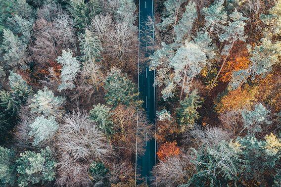 Luftaufnahme der Straße zwischen Wald und Bäumen
