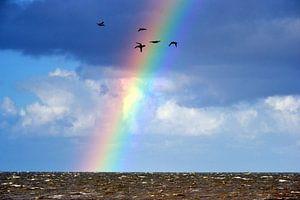 Regenboog boven de Waddenzee van