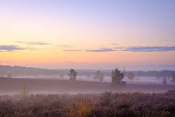 Morgennebel in Zonhoven von Johan Vanbockryck