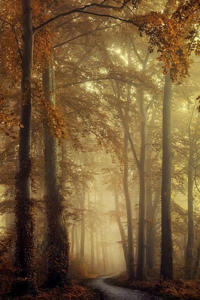 Bos in Lochem van Martin Podt