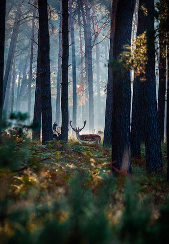 Hert in het ochtendgloren van Mitchell Routs